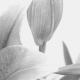 Flower Funeral Memorial Header 1900×300